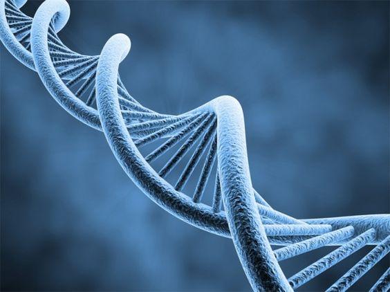 La molécule chimique d'ADN